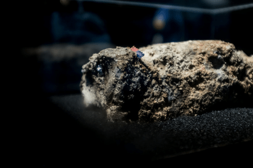Preventing Fatbergs: What can you do to help?